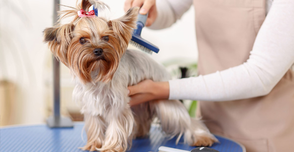 Dog Grooming Diploma Online Course With Harley Oxford