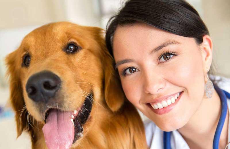 5 Tips For Having A Successful Veterinary Nursing Career